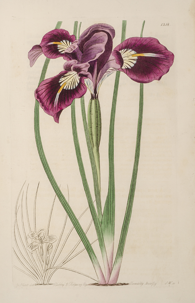 EDWARDS, SYDENHAM; LINDLEY, JOHN - Botanical Register; the