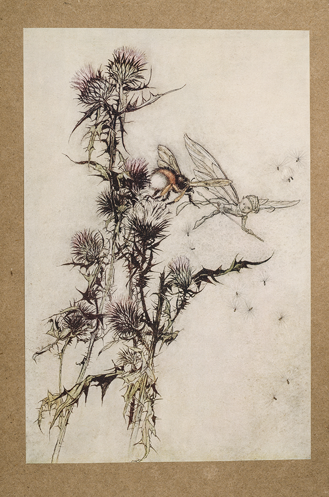 RACKHAM, ARTHUR, ILLUSTRATOR; SHAKESPEARE, WILLIAM - Midsummer-Night's Dream, A.