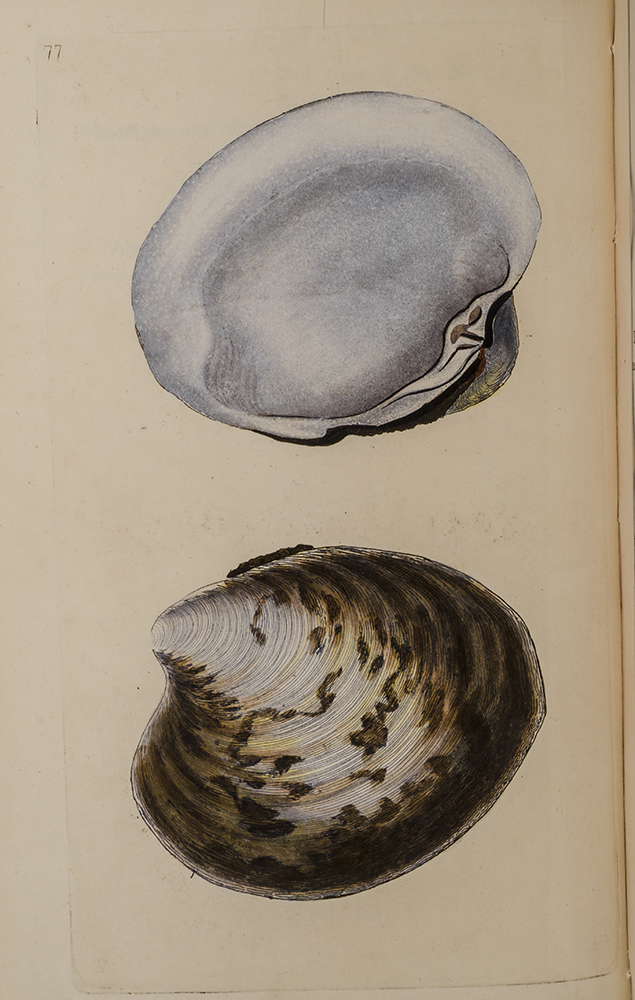 Natural History of British Shells, The. Edward DONOVAN.