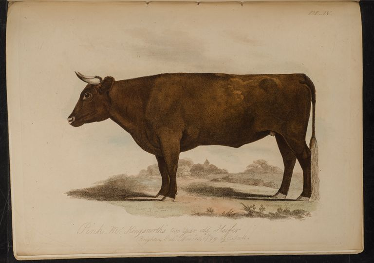 Proceedings of the Sussex Agricultural Society, from its Institution, to 1798, inclusive. Edmund SCOTT.