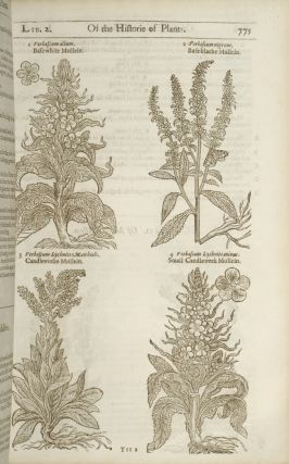 Herball or Generall Historie of Plantes, The