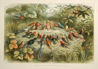 Fairyland, In. Richard DOYLE, illustrator, William ALLINGHAM.
