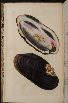 Natural History of British Shells, The