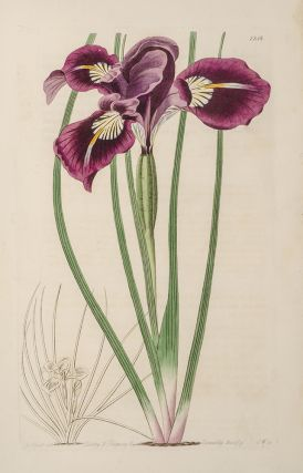Botanical Register; The. Sydenham EDWARDS, John LINDLEY