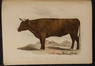 Proceedings of the Sussex Agricultural Society, from its Institution, to 1798, inclusive. Edmund...