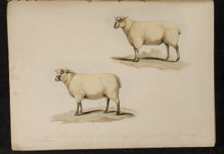 Proceedings of the Sussex Agricultural Society, from its Institution, to 1798, inclusive.